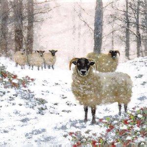 ペーパーナプキン(33)ppd:(5枚)Highland Sheep-PP397