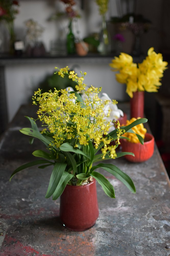 オンシジューム(蘭鉢)+ Henry Dean花器
