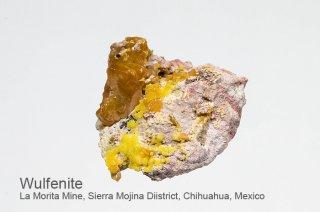 ウルフェナイト 結晶 メキシコ産 La Morita Mine, Sierra Mojina Diistrict,  Chihuahua, Mexico Wulfenite モリブデン鉛鉱 