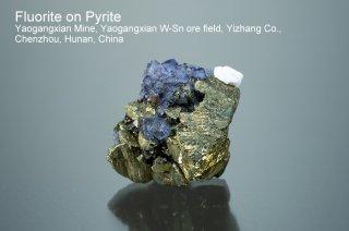 フローライトonパイライト 結晶 チャイナ Yaogangxian Mine, Yaogangxian W-Sn ore field Yizhang Co Chenzhou, Hunan China