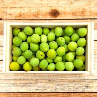 (冷蔵)フタ付き粗仕上げ訳あり木箱入り青梅(豊後梅)サイズ中玉以上混合約3kg