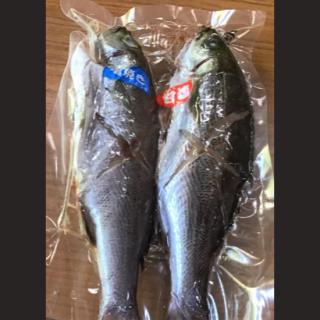 イサキ焼き魚用