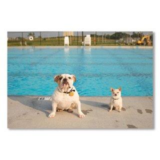 Bulldog And Chihuahua