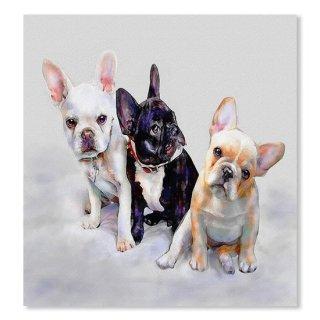Three Frenchie Puppies