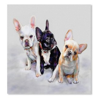 <img class='new_mark_img1' src='https://img.shop-pro.jp/img/new/icons16.gif' style='border:none;display:inline;margin:0px;padding:0px;width:auto;' />Three Frenchie Puppies