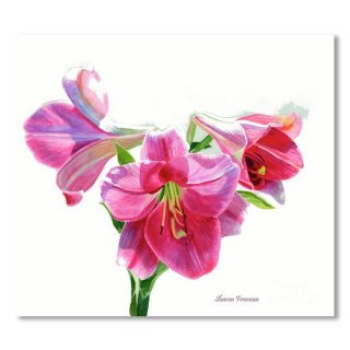 <img class='new_mark_img1' src='https://img.shop-pro.jp/img/new/icons14.gif' style='border:none;display:inline;margin:0px;padding:0px;width:auto;' />Bright Rose Colored Lilies