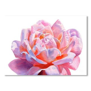 <img class='new_mark_img1' src='https://img.shop-pro.jp/img/new/icons14.gif' style='border:none;display:inline;margin:0px;padding:0px;width:auto;' />Colorful Pink Rose Blossom on white