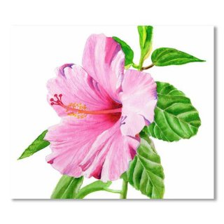 <img class='new_mark_img1' src='https://img.shop-pro.jp/img/new/icons14.gif' style='border:none;display:inline;margin:0px;padding:0px;width:auto;' />Pink Hibiscus with White Background