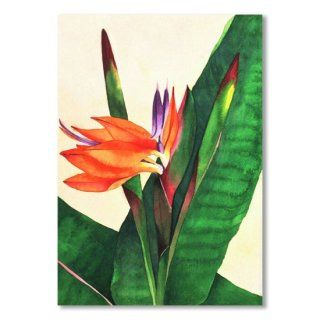 <img class='new_mark_img1' src='https://img.shop-pro.jp/img/new/icons14.gif' style='border:none;display:inline;margin:0px;padding:0px;width:auto;' />Bird Of Paradise