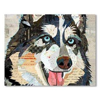 Steely Eyed Husky