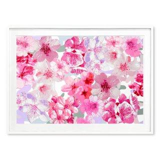 Sakura Hanami - Rosa