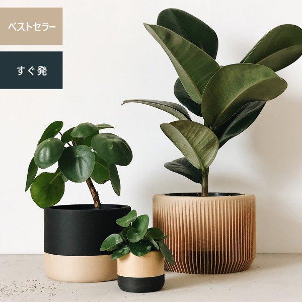 Two-tone Set of 3 [12cm] Nairobi | [5.5cm] Ecotool | [14cm] Praha / ツートン プランター3個セット