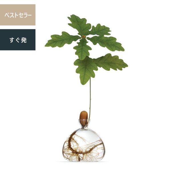 Acorn Vase どんぐりベース