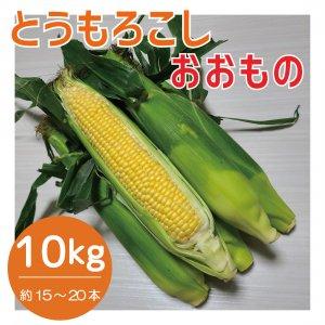 【予約販売】 とうもろこし おおもの 約5kg ~7月より順次発送〜