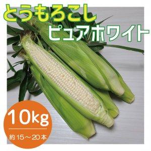 【予約販売】 とうもろこし ピュアホワイト 約5kg ~7月より順次発送〜