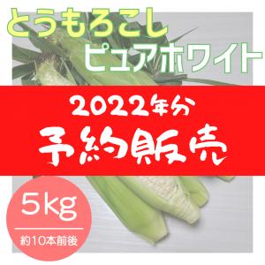【2022年分】ピュアホワイト 約5kg