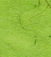 手漉き月桃紙  緑濃