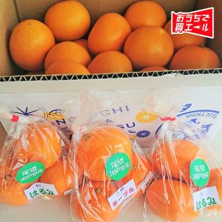 《クロスロードみつぎ》 瀬戸内柑橘セット ★送料込み(一部地域を除く)★