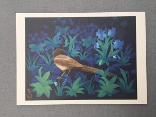 [絵はがき]野の鳥