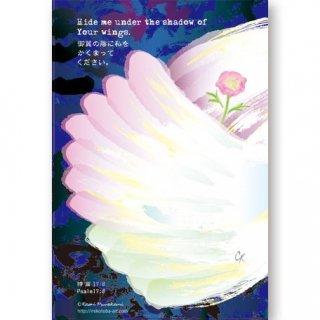 みことばカード「御翼…詩篇17:8」