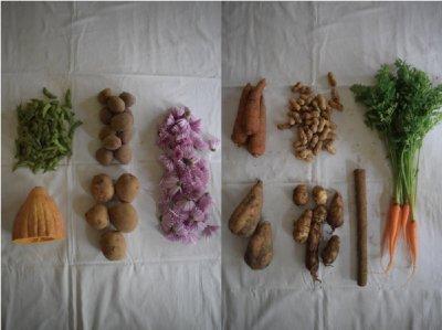 古来種野菜セット1回分 (10〜12種類)