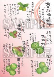 あったかいが 梅(背景紅色) 絵ハガキサイズ【B106A】