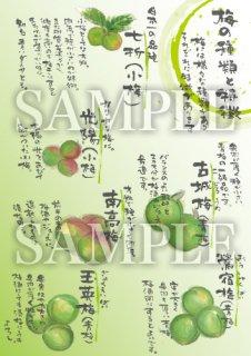 あったかいが 梅(背景緑) A4サイズラミネート加工【B107B】