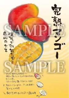 あったかいが 完熟マンゴー 絵ハガキサイズ【B075A】