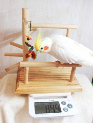 体重計にもなる♪ちょっと可愛いプチバードジム_01s_鳥のおもちゃ