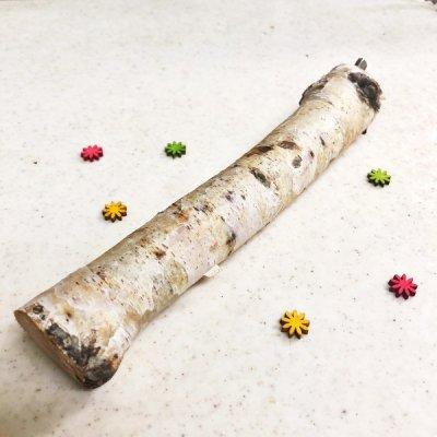 白樺の止まり木 Lサイズ 1本(全長約17cm / 直径約25mm以上)