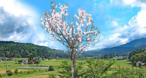 宝興寺  天空の樹木葬[個別]