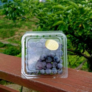 冷凍ブルーベリー 100g