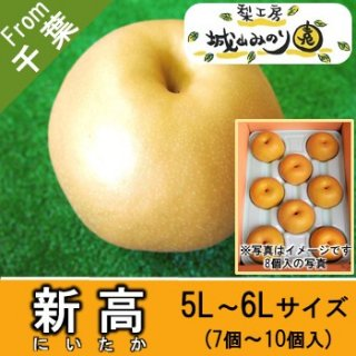 【N-J5 新高 5L・6Lサイズ \4000】 城山みのり園 かための梨 王道の梨 お供え物