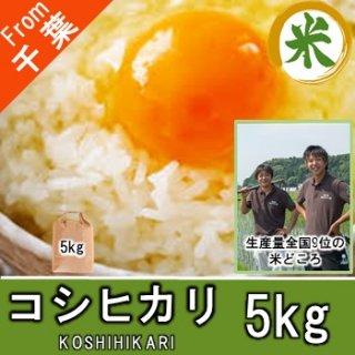 【O-D2 コシヒカリ 精米 5kg】 お米 値段 ちばのお米