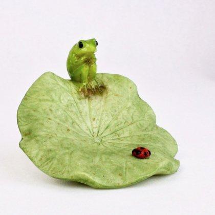 ロータス葉カエルとてんとう虫