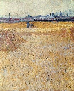 麦畑の刈り取り風景