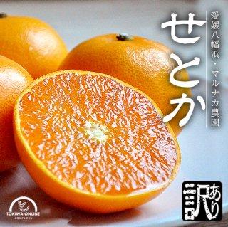 せとか(訳あり・家庭用)4.5Kg