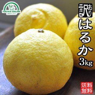はるか みかん (訳あり) 3kg