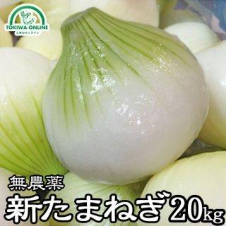 新玉ねぎ(無農薬) 20Kg