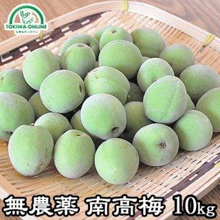 青梅 南高梅(無農薬) 10Kg