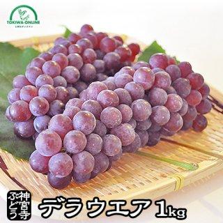 神宮寺ぶどう(デラウエア)   1kg