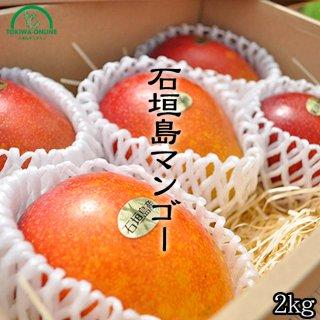 マンゴー (お中元 ギフト) 2Kg