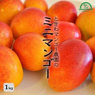 ミニマンゴー (贈り物ギフト) 1Kg