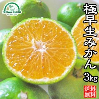 極早生みかん 3Kg 愛媛 マルナカ農園 産地直送(農園直送)