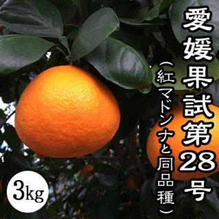 紅マドンナ(愛媛果試第28号)3Kg