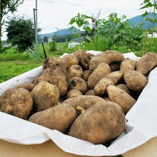 百笑 無農薬・無肥料じゃがいも 80サイズ箱セット(8~10kg)
