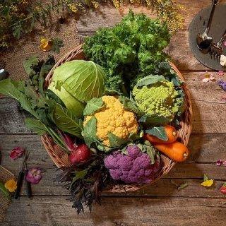 お任せ野菜BOX