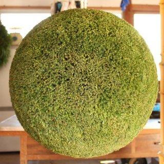 杉玉・直径50cm