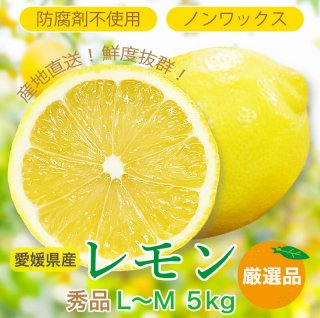 愛媛県産レモン LからM 5kg