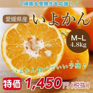 いよかん 約4.8kg 23~24玉入 Lサイズ